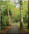 SX9065 : New cycle path near Torbay Hospital by Derek Harper