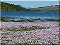NM8523 : Loch Feochan, near Knipoch by sylvia duckworth
