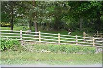 SK2376 : Sheep employed as lawnmowers by Bill Boaden