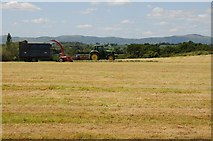 SO8843 : Silaging at Dunstall by Philip Halling
