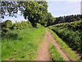 SJ5373 : Footpath to Delamere Forest by Jeff Buck