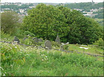 SE0722 : The Mount Pleasant graveyard, Norland by Humphrey Bolton
