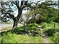 SU7801 : Woodland on New Lipchis Way LDP by Rob Farrow