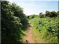 SJ5275 : The Delamere Way near Harrol Edge by Jeff Buck