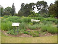 TL4557 : Mixed plantings at Botanic garden by Paul Gillett