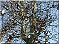 NT2272 : The Shoe Tree, Saughton Skatepark by kim traynor