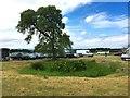 SJ4956 : Bolesworth International Horse Show: reed-choked pond in car park by Jonathan Hutchins