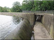 SE3337 : Waterloo Lake - overflow (1) by Stephen Craven