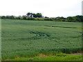 NZ3455 : Field of wheat below Offerton village by Oliver Dixon