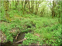 SH6541 : Stream in Coed Llyn Mair by Christine Johnstone