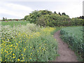 SE2229 : Footpath with weeds by Stephen Craven