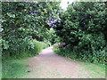 TQ5307 : Footpath near Arlington Reservoir by PAUL FARMER
