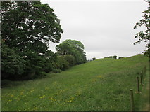 N0603 : Field on the outskirts of Birr by Jonathan Thacker