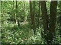 TQ3330 : Platts Wood by Simon Carey