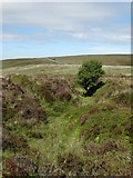 SX6781 : Gully on Dartmoor - west of Bennett's Cross by Neil Theasby