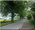 SJ5013 : Tree-lined Sydney Avenue, Shrewsbury by Jaggery