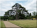 TL2104 : Cedar of Lebanon, North Mymms Park, Hertfordshire by Christine Matthews