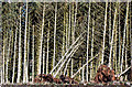 NO0200 : Conifers, Lendrick Muir woodland by William Starkey