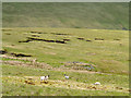 NY3028 : Mountain slopes with ruined sheepfold by Trevor Littlewood
