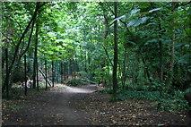 SD2806 : Path through the woods near St Luke's Church Road, Formby by Mike Pennington