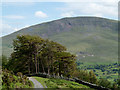 NY3025 : Trees west of the Blencathra Centre by Trevor Littlewood