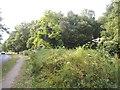 TQ2195 : Rowley Green Common by Rowley Lane by David Howard