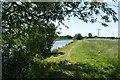 SE6318 : Knottingley and Goole Canal near Pollington by Graham Hogg