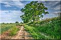 SE7634 : Footpath North of Spaldington by Carl Wilson