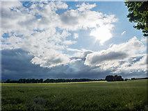 NH6454 : Field below Balnakyle Farm by Julian Paren