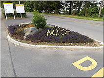 SN5981 : Floral Display at Aberystwyth University by Adrian Cable