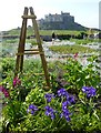 NU1341 : Lindisfarne Castle and Gardens by DS Pugh