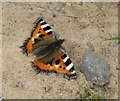 NU1325 : Small Tortoiseshell butterfly (Aglais urticae) by Russel Wills