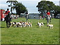SO6452 : Bromyard Gala - the Clifton on Teme Hunt Hounds by Chris Allen