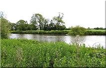 SU5393 : The River Thames near Long Wittenham by Steve Daniels