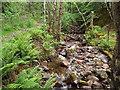 NN1862 : Woodland stream near Kinlochmore by Malc McDonald
