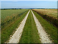 SE8657 : The Track on Huggate Wold by Andy Beecroft