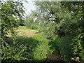 TL4054 : Bourn Brook by Hugh Venables