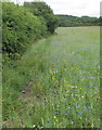 TQ1584 : Wild flower meadow, Horsenden Hill open space by David Hawgood