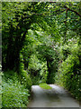 SS2218 : Lane to Welcombe Mouth, Devon by Roger  Kidd