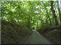 SU7491 : Holloway Lane approaching Turville by David Howard