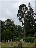 SU7963 : St James, Finchampstead: churchyard (1) by Basher Eyre