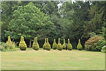 TL6804 : Topiary Triffids by John Myers