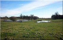 SE3953 : Lake and pool, Ribston Park by Derek Harper