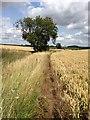 TL3453 : Path near Kingston by Dave Thompson