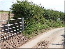 SX5646 : Unusual signs by the road at Stoke by David Smith