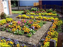 TF0920 : Front garden flowers at Bourne, Lincolnshire by Rex Needle