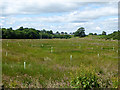 NY6823 : Marshy ground along the Frith Beck by Oliver Dixon
