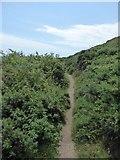 SX5645 : Path through the gorse on Stoke Down by David Smith