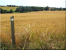 TM1928 : Footpath marker near Great Oakley by Malc McDonald