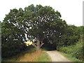 TM0223 : Path near Colchester by Malc McDonald